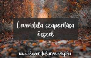 levendula szaporítása ősszel