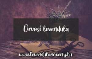 orvosi levendula